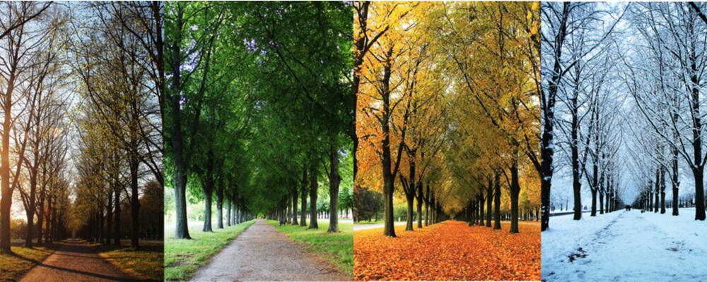 The four seasons of the herrenhausen garden alley in hanover